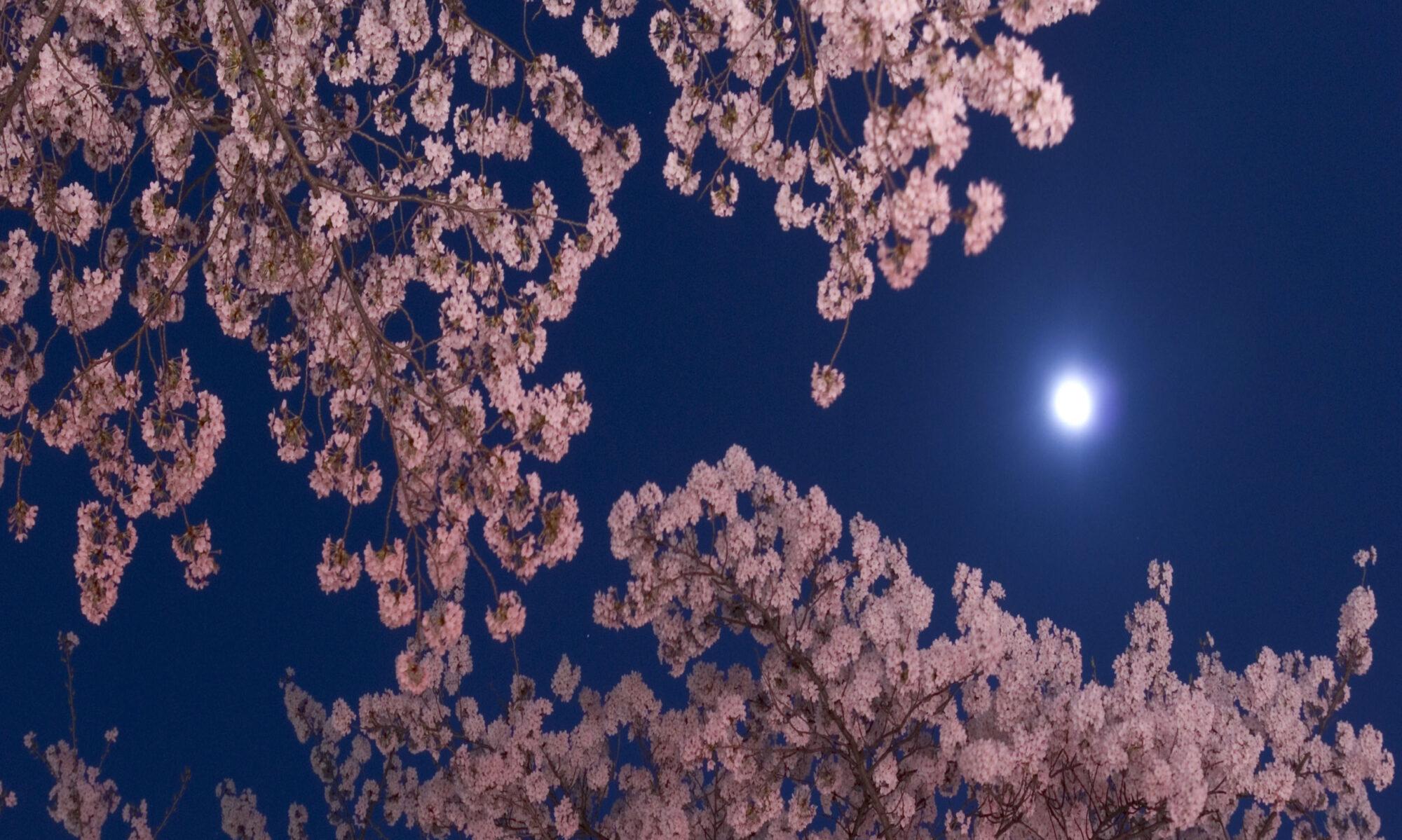 Godspeed Sleep-Relaxing-Healing musicのブログ